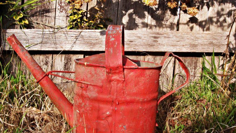 Jesień w ogrodzie – jakie prace należy wykonać w listopadzie?